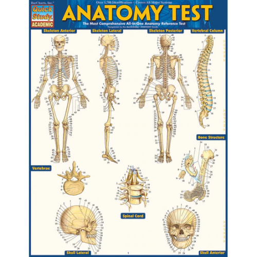 Image For QUICK STUDY ANATOMY TEST